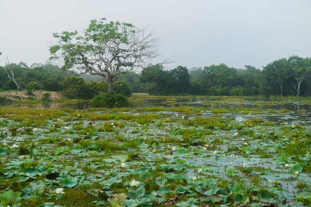 Parc national africain