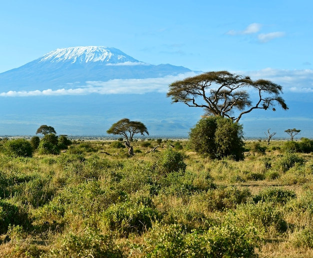 Parc national d'amboseli et mont kilimandjaro au kenya