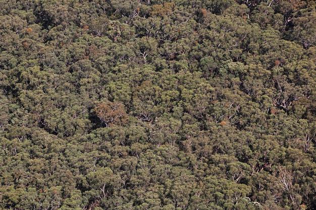 Parc national de blue mountains, australie