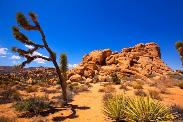 Parc national de joshua tree yucca valley désert du mohave californie