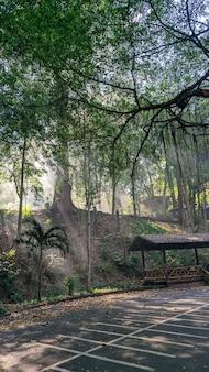 Parc national de lan sang en thaïlande. photo mobile, voyage léger