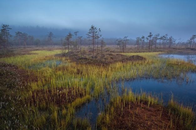 Parc national des marais d'ozernoye dans le nord de la russie