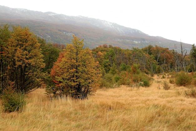 Parc national de la terre de feu en automne, patagonie, argentine, amérique du sud