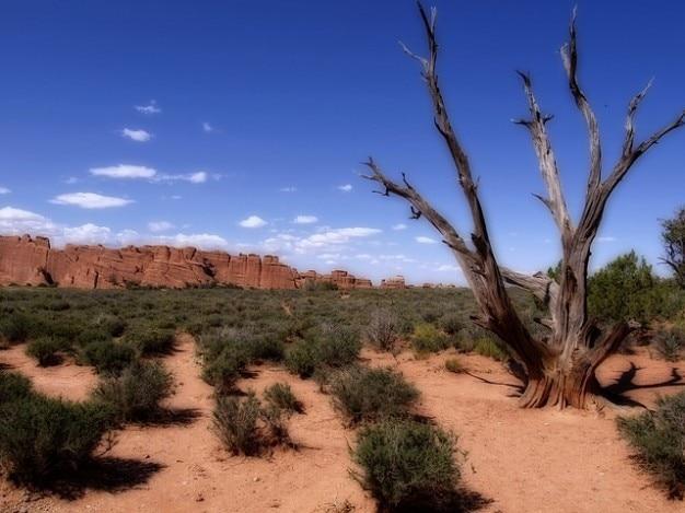Parc national usa érosion des arcs moab