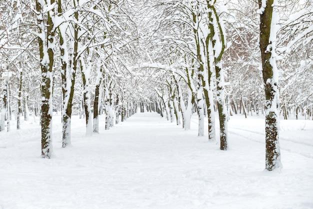 Parc à neige avec arbres blancs dans l'allée centrale