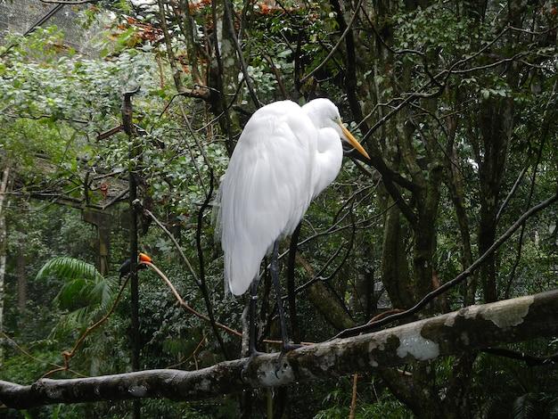 Le parc ornithologique à iguazu, brésil