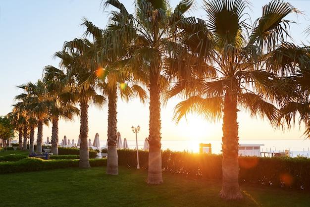 Parc de palmiers verts et leurs ombres sur l'herbe.
