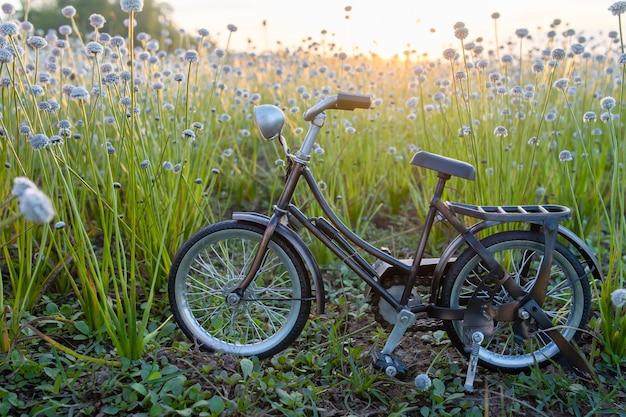 Parc à vélos à belle herbe fleurie avec une belle lumière.