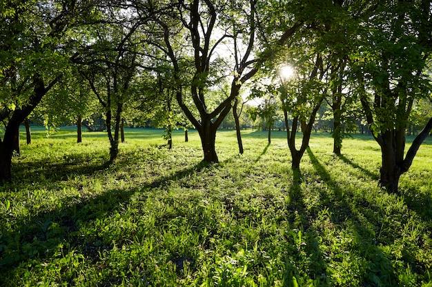 Parc vert au printemps