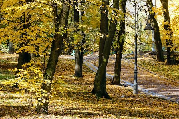 Parc de la ville d'automne avec des chemins parsemés de feuilles jaunes et d'une lampe.