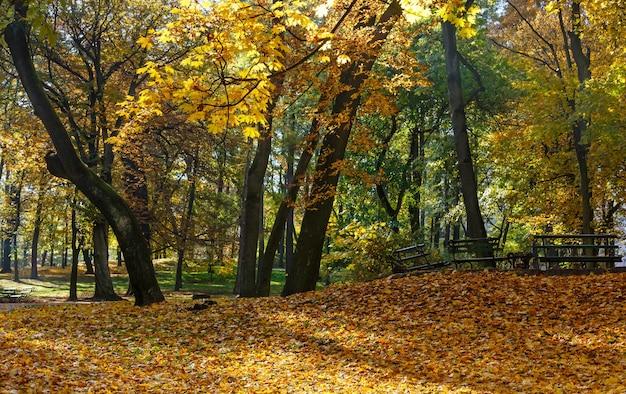 Parc de la ville d'automne avec des feuilles jaunes sous les arbres et les bancs.