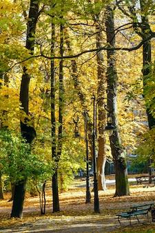 Parc de la ville d'automne avec des feuilles jaunes sous les arbres et la lampe.