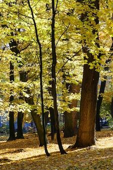 Parc de la ville d'automne avec des feuilles jaunes sous les arbres.