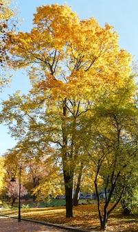 Parc de la ville d'automne avec sentier, érable jaune et lampe.