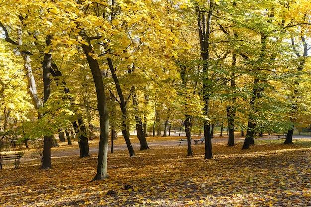 Parc de la ville d'automne avec des sentiers parsemés de feuilles jaunes et de bancs.