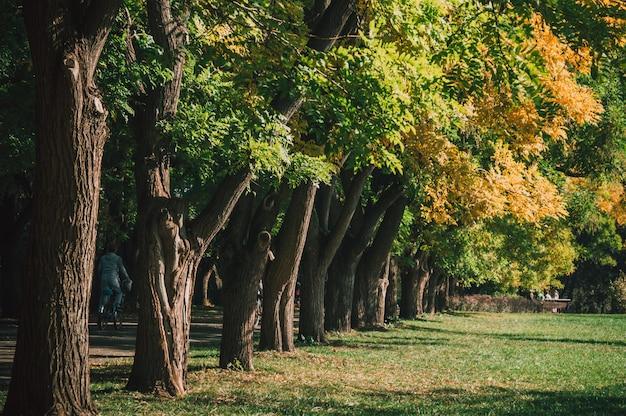 Parc de la ville d'automne