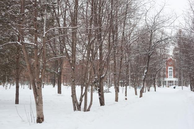 Parc de la ville en hiver