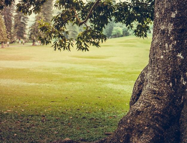 Parc de la ville verte avec des arbres. milieux naturels