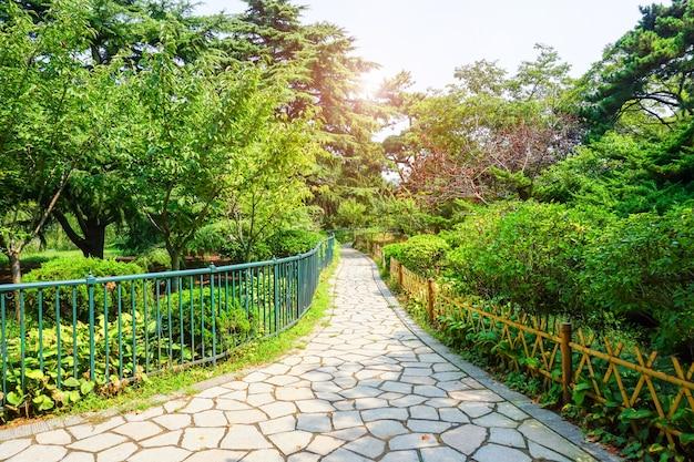 Parcours de couleur plante plantes voir luxuriante