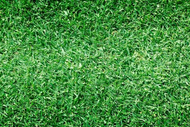 Parcours de golf vert