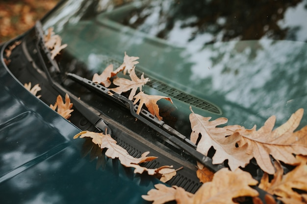 Pare-brise d'une voiture pleine de feuilles mortes