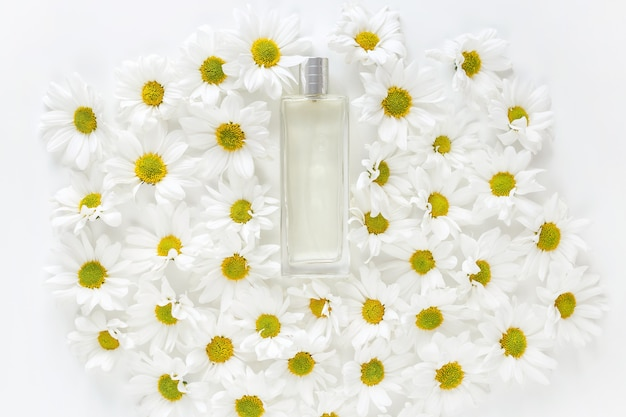Parfum printanier frais. pot en verre avec beaucoup de boutons de fleurs de marguerite dorée sur fond blanc. vue de dessus, pose à plat