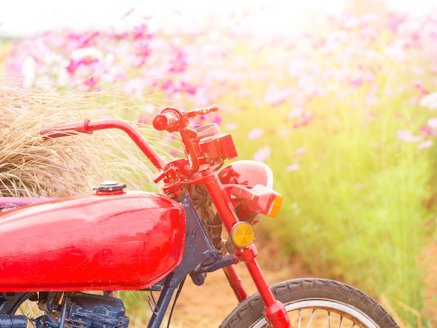 Parking moto dans le champ de la fleur