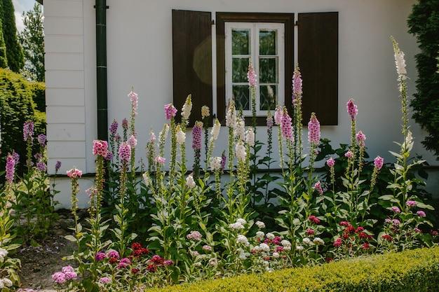 Un parterre de fleurs avec des cloches roses devant la maison