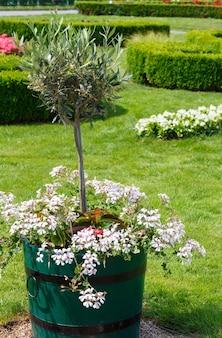 Parterre de fleurs en fleurs et arbre dans la baignoire dans le parc de la ville d'été
