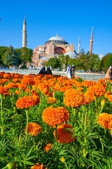 Un parterre de fleurs avec une mosquée de sofia défocalisée en arrière-plan.