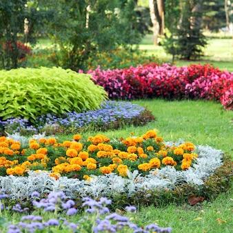 Parterres de fleurs colorés en fleurs dans le parc de la ville d'été