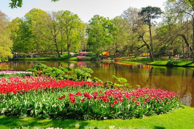 Parterres de fleurs des jardins de keukenhof à lisse, pays-bas