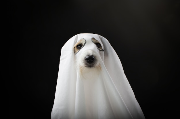 Partie de costume fant halloween chien
