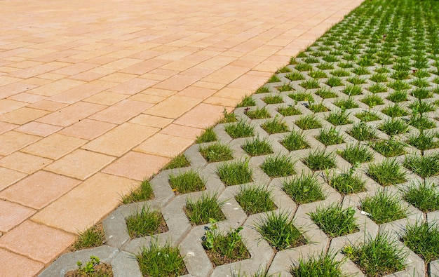 Partie de pavés et pelouse décorative