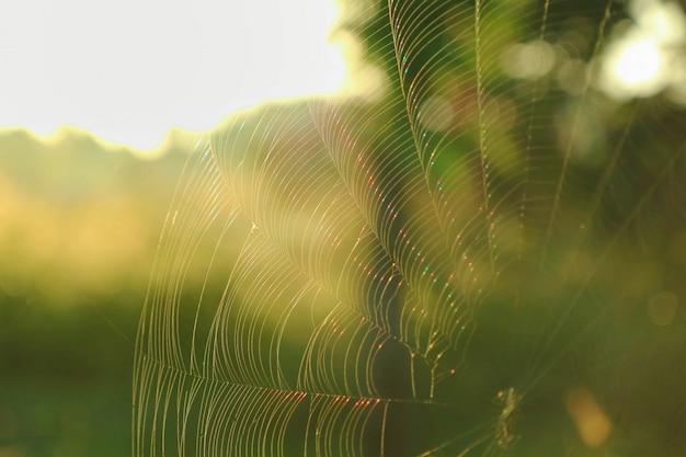 Partie de la toile d'araignée belle couleur arc-en-ciel avec la lumière du soleil du matin et fond de feuilles vertes. concept animal et nature.