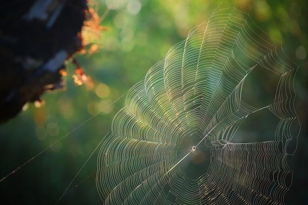 Partie de la toile d'araignée couleur arc-en-ciel avec la lumière du soleil du matin et fond de feuilles vertes.