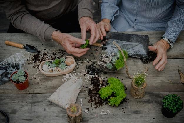 Passe-temps terrarium plantes