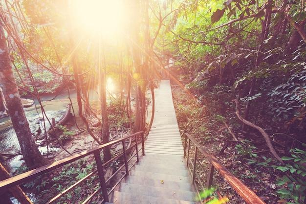 Passerelle en bois dans la jungle le long des cascades en thaïlande. beaux paysages asiatiques.