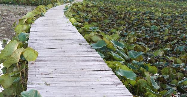 Passerelle En Bois Sur L'étang De Lotus Photo Premium