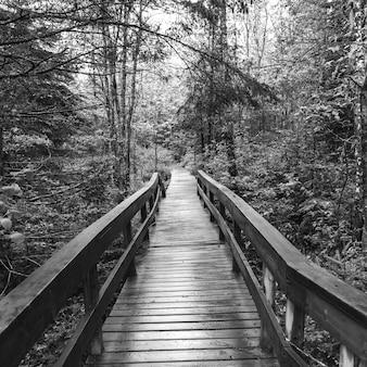 Passerelle en bois menant vers la forêt, saint-louis-de-kent, nouveau-brunswick, canada