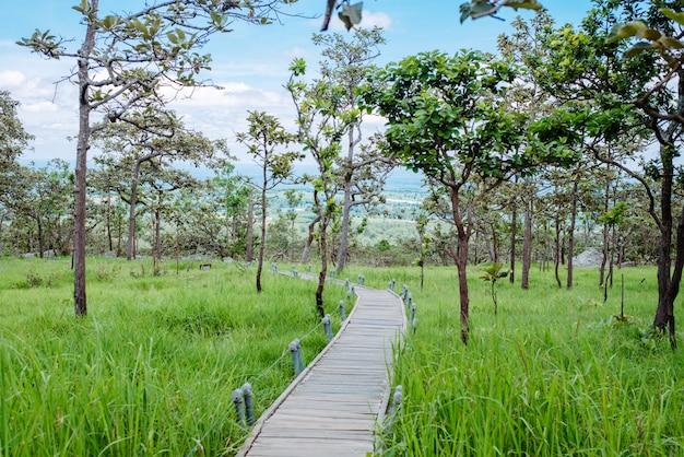 Passerelle en bois à travers la forêt tropicale avec la lumière du matin