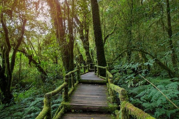 Passerelle dans la forêt pluvieuse