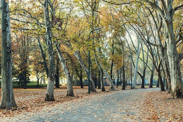 Passerelle dans le parc central de la ville de budapest en saison d'automne
