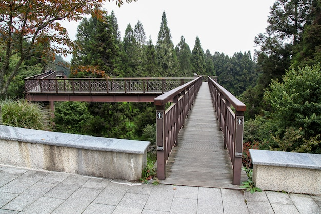 La passerelle du ciel bois dans le parc national d'alishan à taiwan.