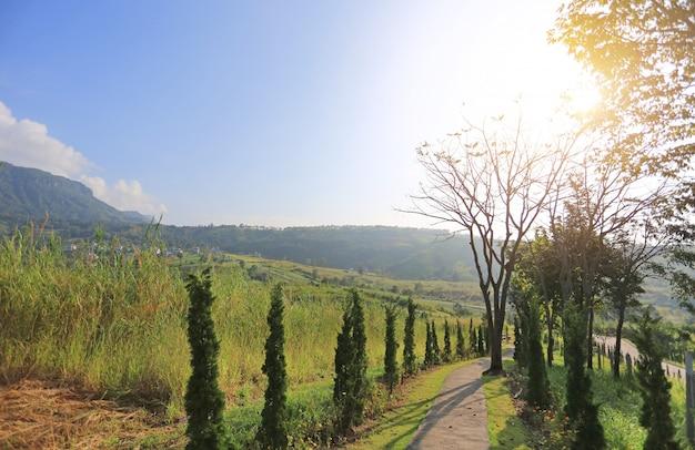 Passerelle à flanc de colline avec le soleil du matin.