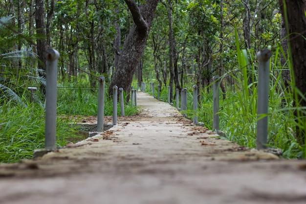 Passerelle en forêt