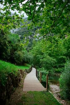 Passerelle naturelle menant à la forêt verte