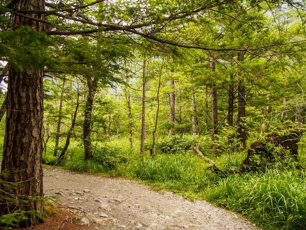 Passerelle sous l'arbre dans la forêt