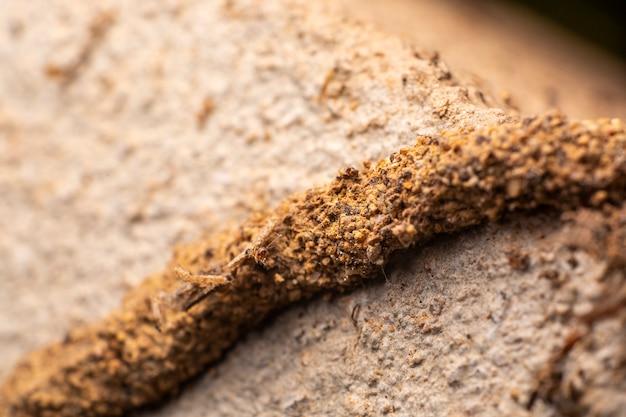 Passerelle de termites
