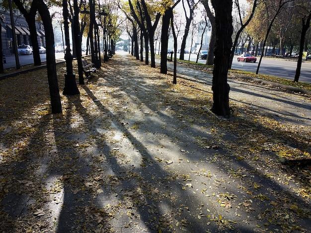 Passerelle à travers de nombreux arbres autour du parc pendant la journée